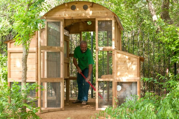 The unobstructed doorway and wide entry allow a person to just rake out the inside of the coop.