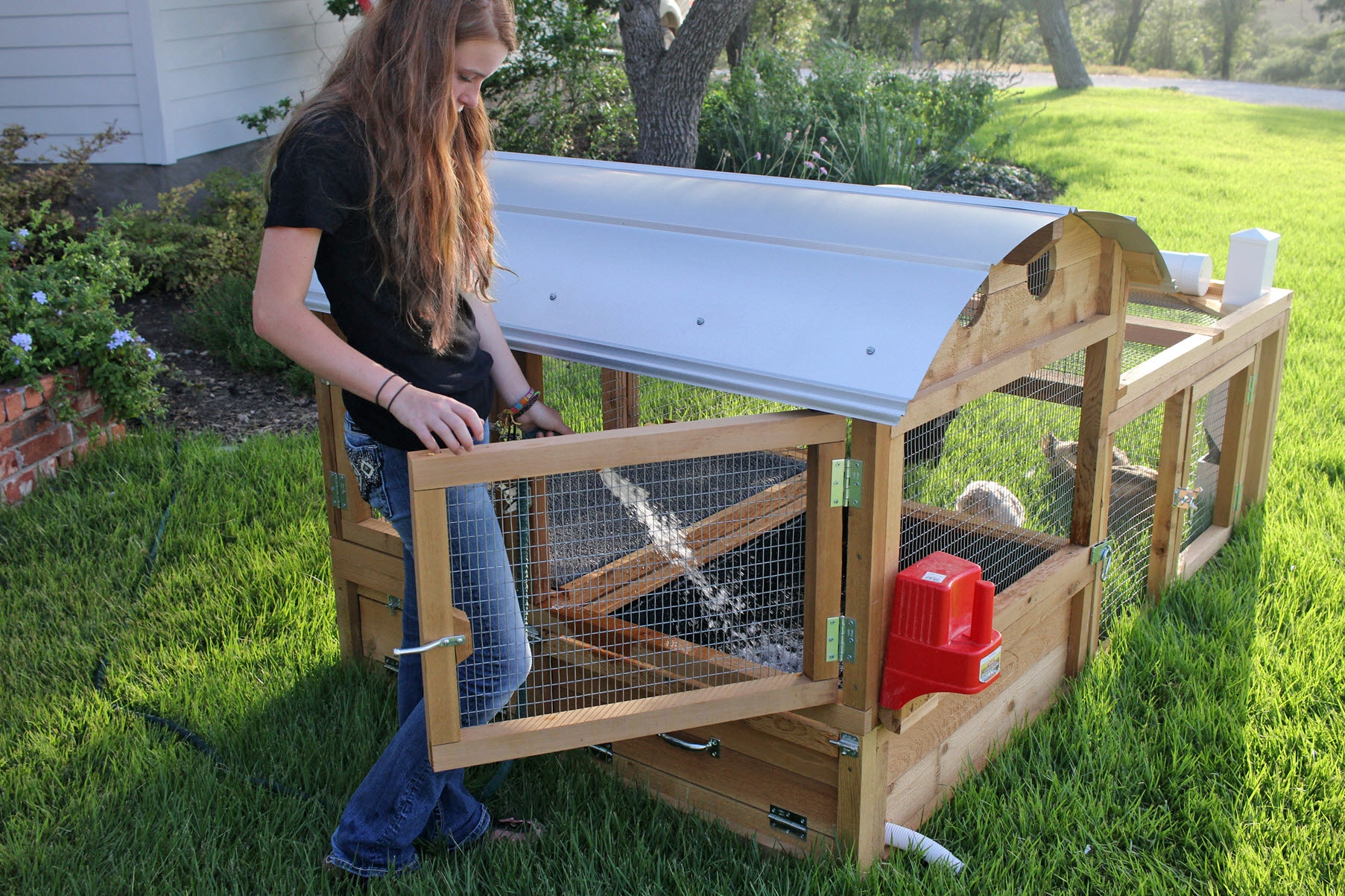 Large chicken coops related keywords large chicken coops for Chicken and duck coop