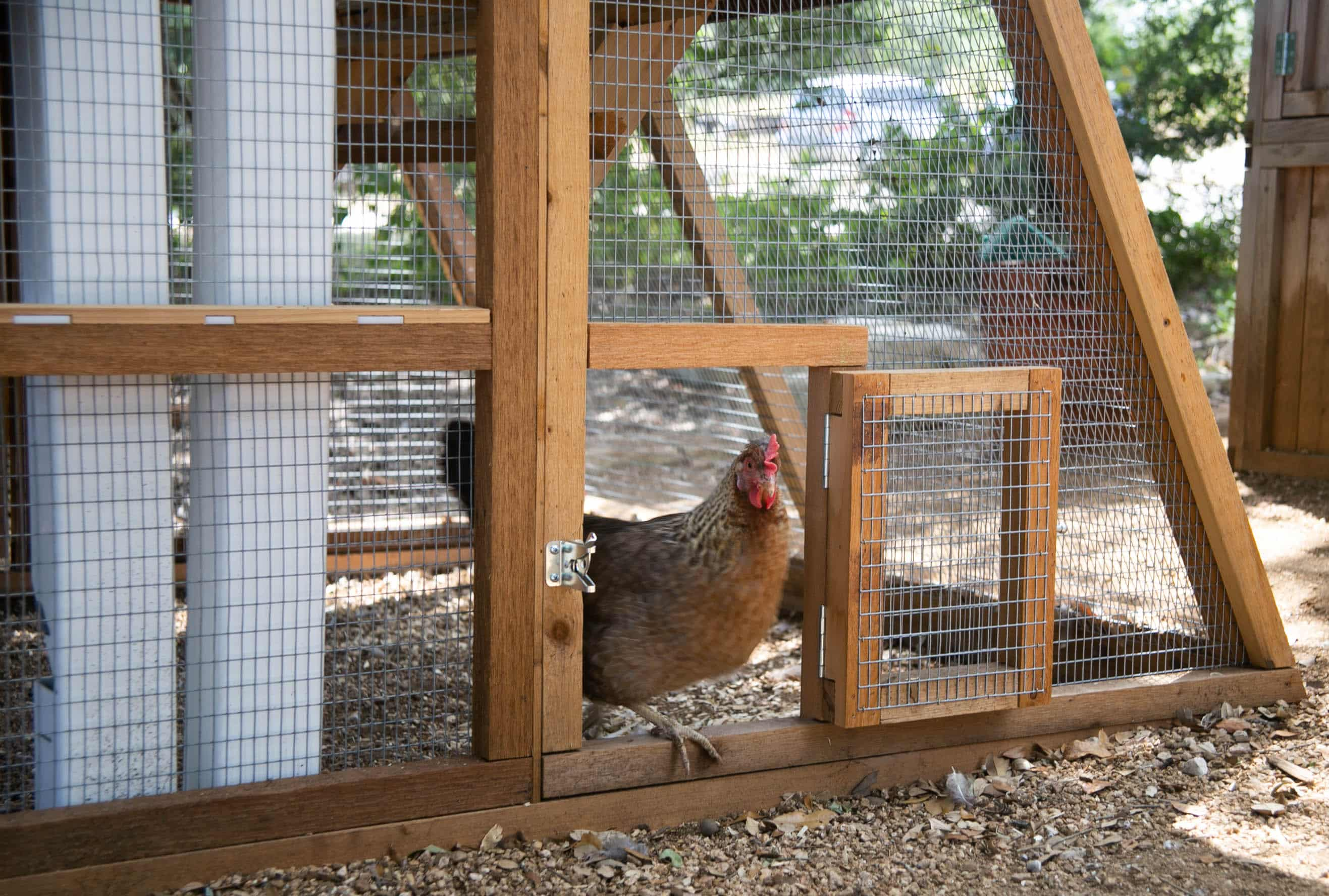 Round-Top Chicken Loft™ Turn-Out Door