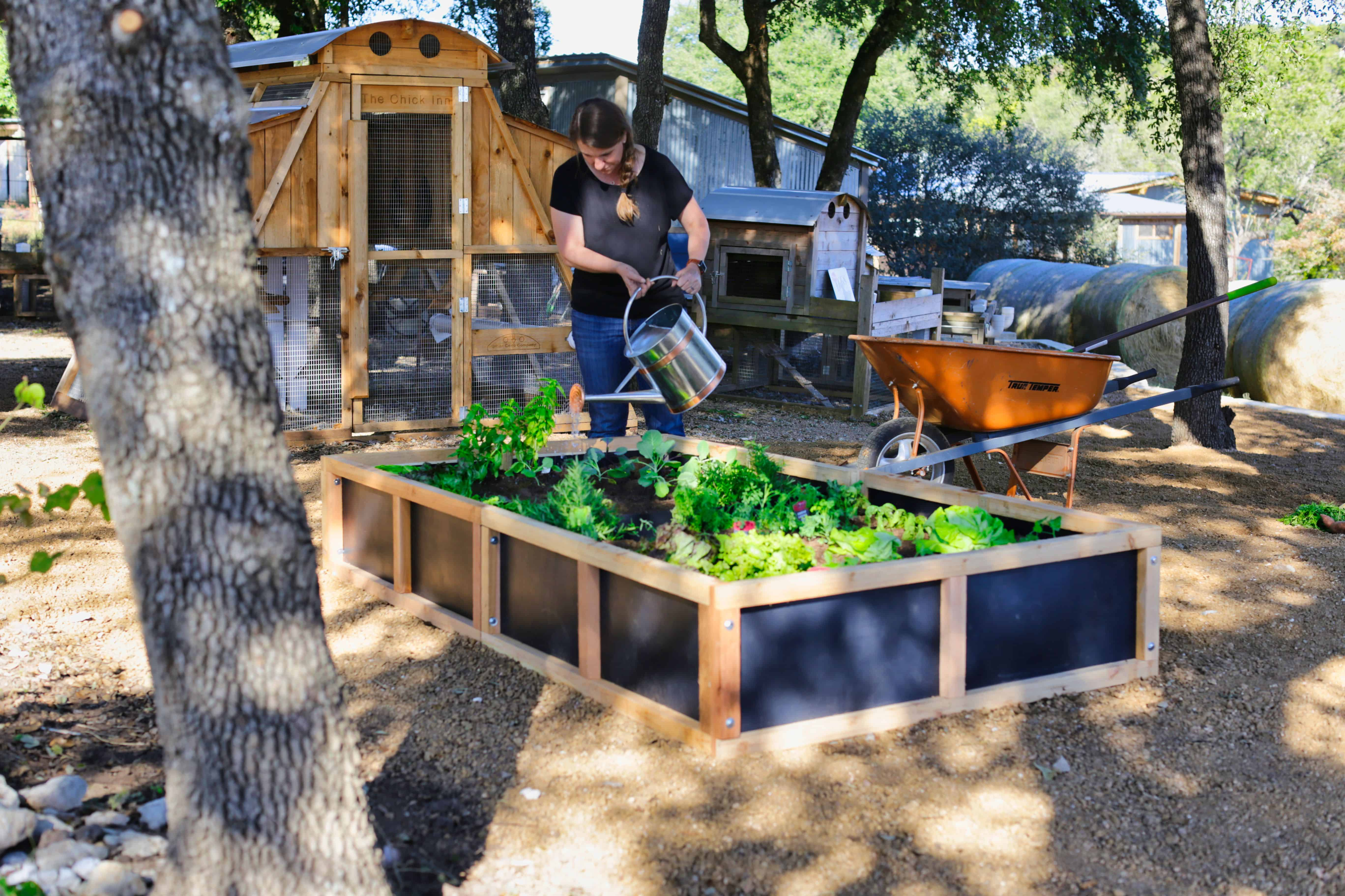 Roost and Root Raised Vegetable and Flower Gardens